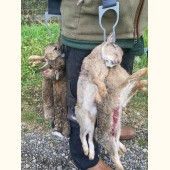 XL Rabbit & Game Carrier